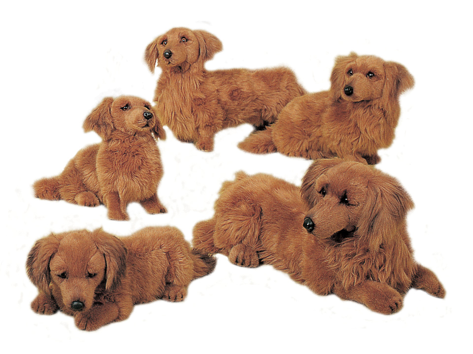 Dachshunds, Longhaired