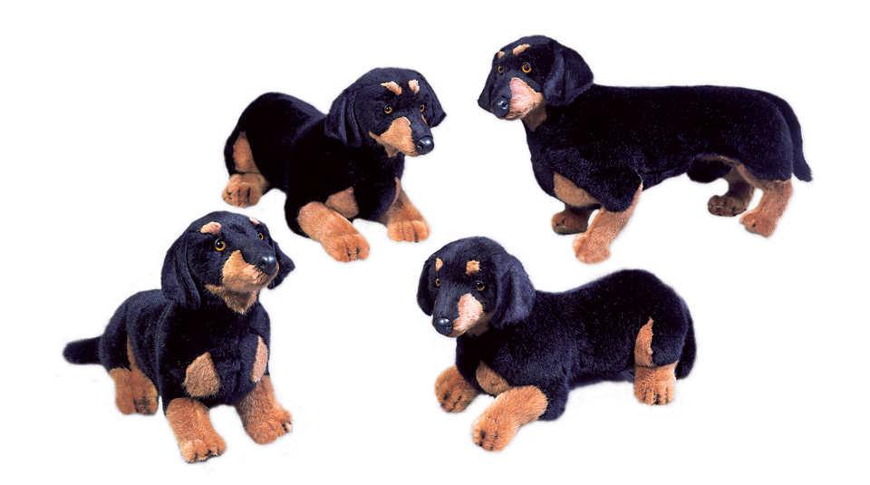 Dachshunds, Smooth