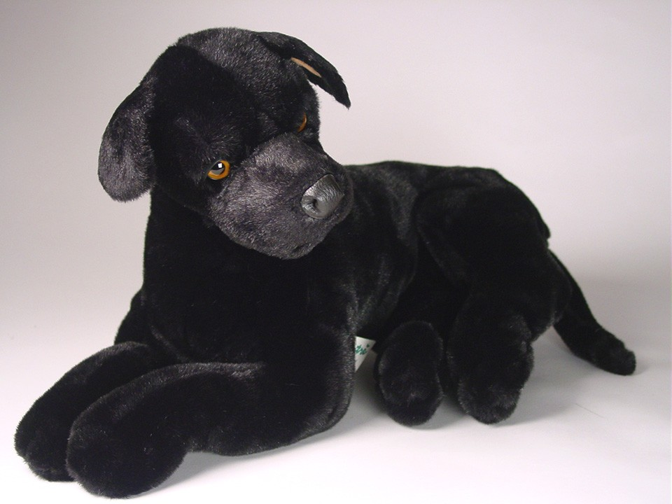 Black Great Dane Puppy 3316 - Great Danes - Dogs