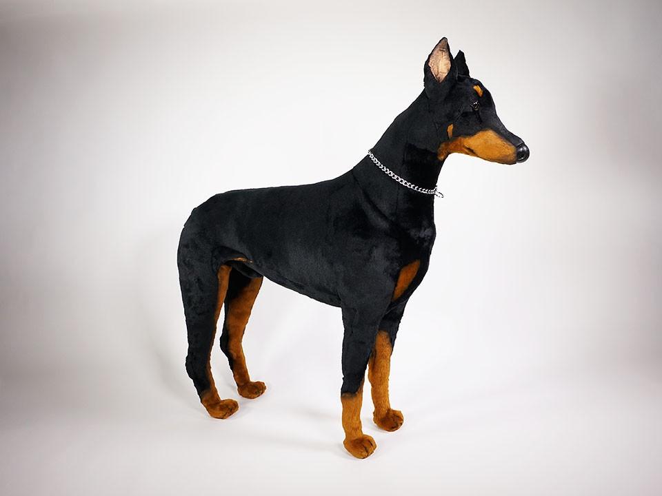 Doberman Pinscher 0265 Doberman Pinschers Dogs