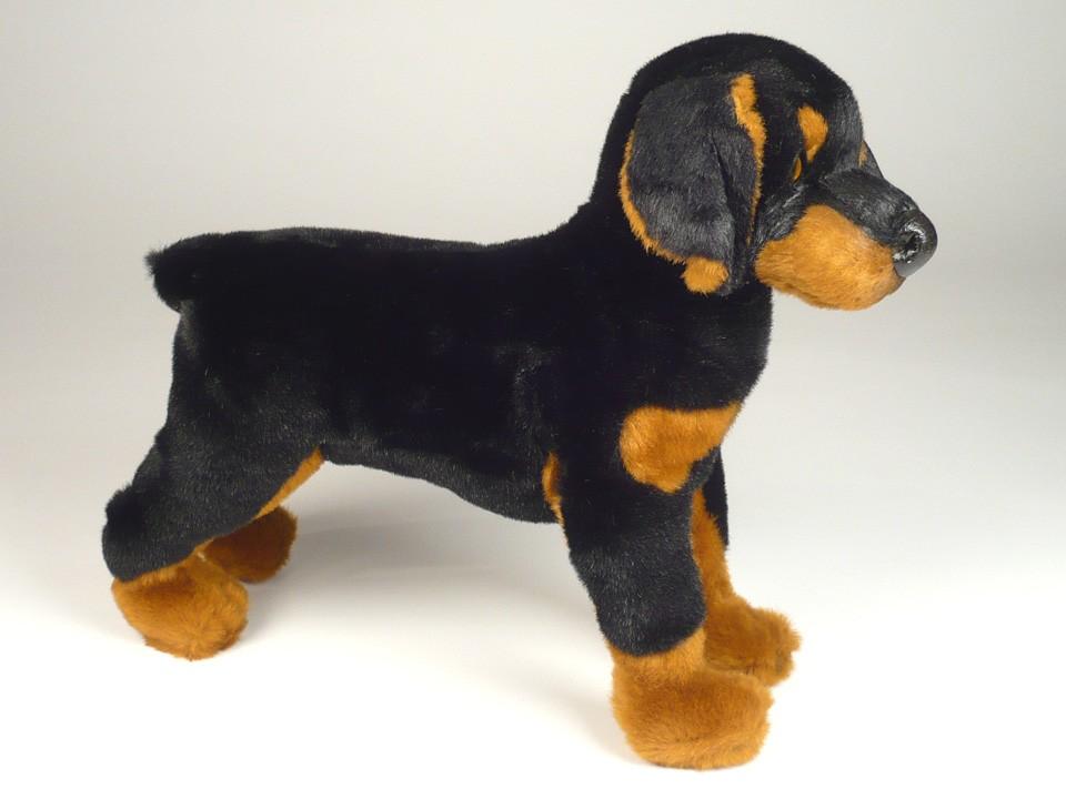 Doberman Pinscher Puppy 0267 Doberman Pinschers Dogs