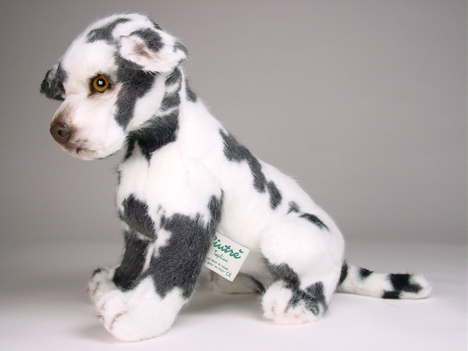 Harlequin Great Dane Puppy 3311 - Great Danes - Dogs