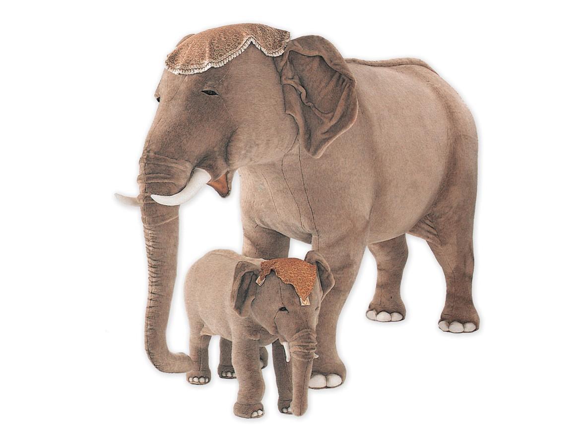 Elephants Animal Animals Calf: Indian Elephant Calf 2575