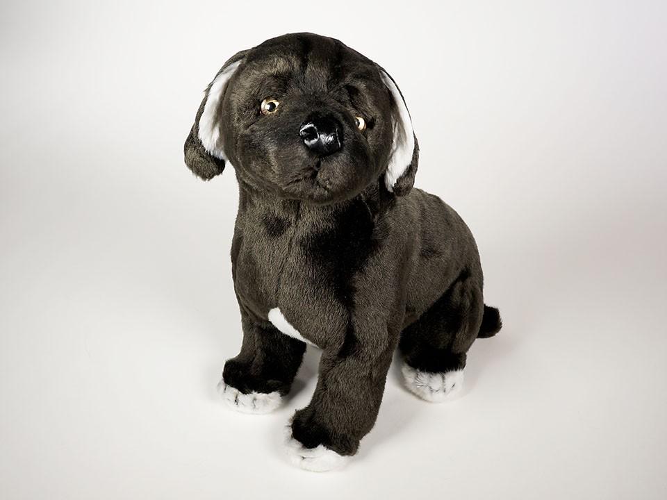 Mastiffi Rodut