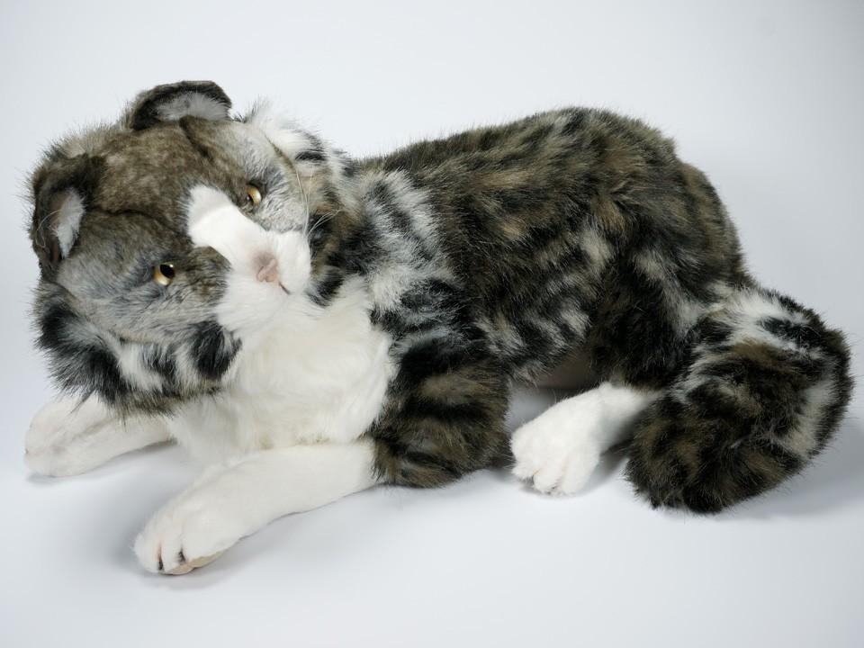 norwegian forest cat 2465