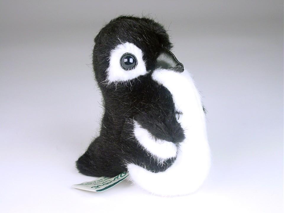 Penguin Chick 2579