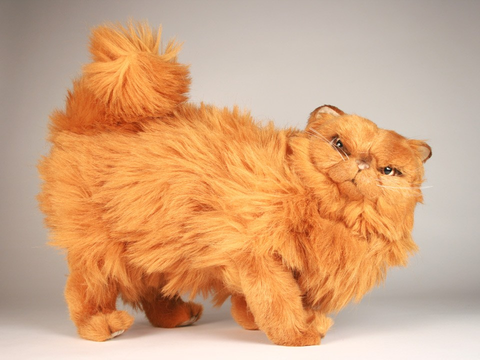ragdoll kittens for sale pa