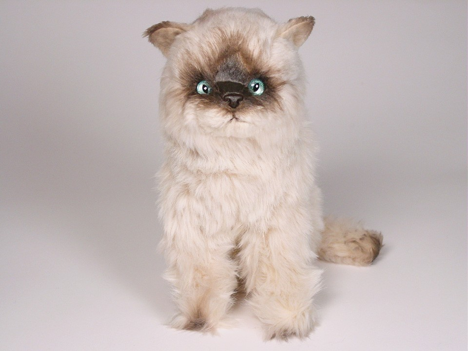 c1a241b5752a Seal Point Himalayan Kitten 2366 - Seal Point Himalayans - Cats