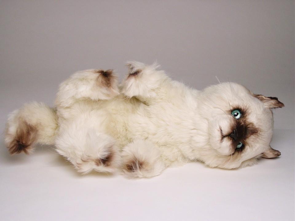 luvsome cat litter