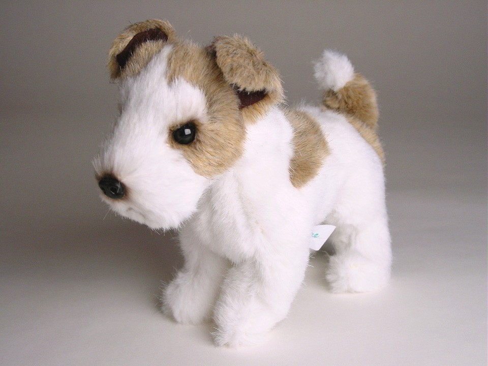 Wire Fox Terrier (Miniature) 4285 - Wire Fox Terriers - Dogs