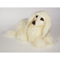Afghan Hound Puppy 0293 by Piutrè