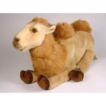 Bactrian Camel Calf 2559 by Piutrè