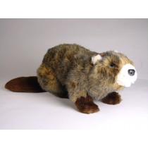 Beaver 2659 by Piutrè