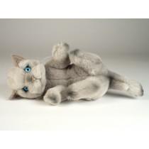 Beige Kitten 2445
