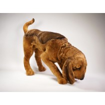Bloodhound 2269 by Piutrè