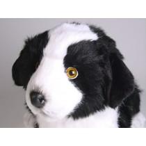 Border Collie Puppy 1218 by Piutrè