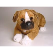 Boxer Puppy 2285 by Piutrè
