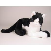 British Shorthair Cat 2343 by Piutrè