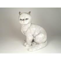 British Shorthair Cat 2460 by Piutrè