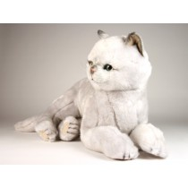 British Shorthair Cat 2461 by Piutrè