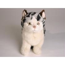 British Shorthair Kitten 2337 by Piutrè