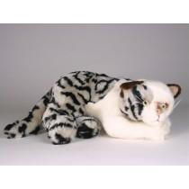 British Shorthair Kitten 2338 by Piutrè