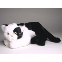 British Shorthair Kitten 2344 by Piutrè