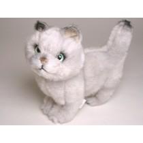 British Shorthair Kitten 2462 by Piutrè