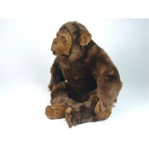 Chimpanzee 2570 by Piutrè
