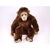 Chimpanzee 2571 by Piutrè