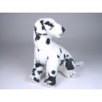 Dalmatian Puppy 3243 by Piutrè