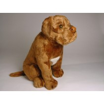 Dogue de Bordeaux Puppy 1283 by Piutrè