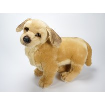 Golden Retriever Puppy 2203 by Piutrè