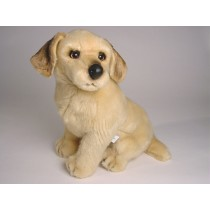 Golden Retriever Puppy 2204 by Piutrè