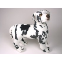 Harlequin Great Dane Puppy 3331 by Piutrè