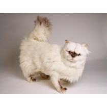 ​​Himalayan Persian ​Cat 24​30 by Piutrè