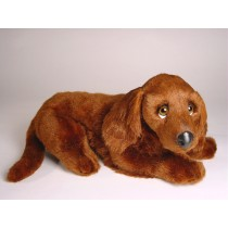 Irish Setter Puppy 3225 by Piutrè