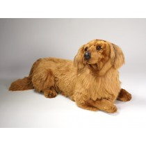 Longhaired Dachshund 2253 by Piutrè