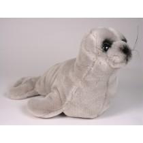 Mediterranean Monk Seal Pup 2676 by Piutrè
