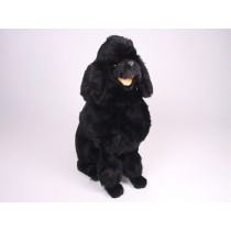 Miniature Poodle 0252 by Piutrè