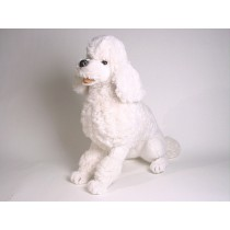 Miniature Poodle 0258 by Piutrè