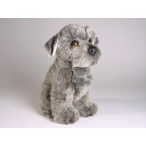 Miniature Schnauzer Puppy 1207 by Piutrè