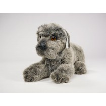 Miniature Schnauzer Puppy 1208 by Piutrè