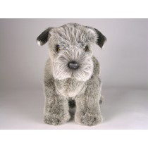 Miniature Schnauzer Puppy 1258 by Piutrè