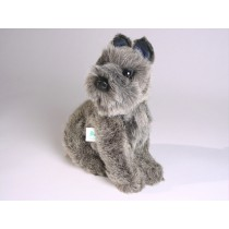 Miniature Schnauzer Puppy 1307 by Piutrè