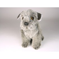 Miniature Schnauzer Puppy 1259 by Piutrè