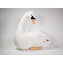 Mute Swan 0730 by Piutrè