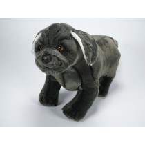 Neapolitan Mastiff Puppy 1361 by Piutrè