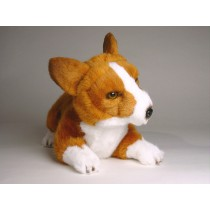 Pembroke Welsh Corgi Puppy 1223 by Piutrè