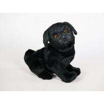 Pug Puppy 3374 by Piutrè
